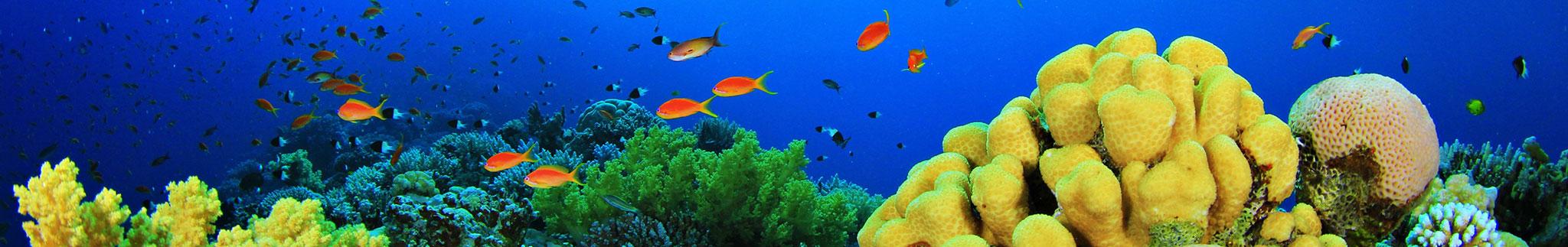 Aquarium Shop: Aquaristik Zubehör günstig, Bild 3