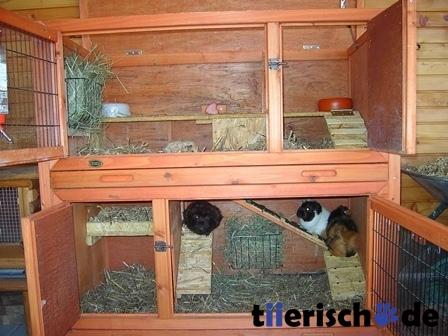 trixie kaninchenstall winterfest mit w rmed mmung isoliert 62404 von trixie g nstig bestellen. Black Bedroom Furniture Sets. Home Design Ideas