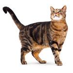 Katzenzubehör, Katzenshop
