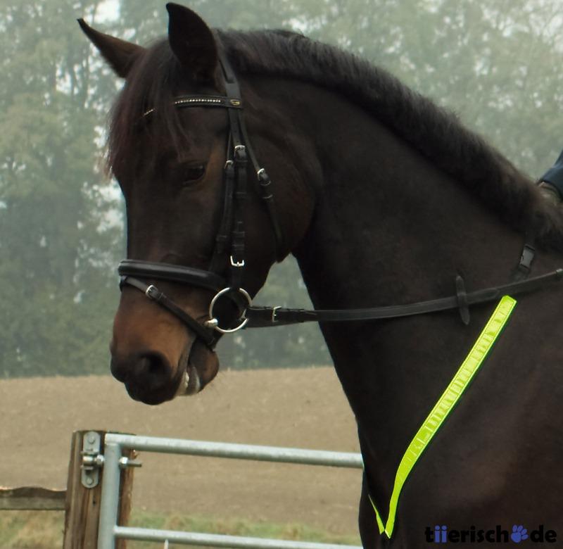 Brustgurt Pferd reflektierend, Bild 2