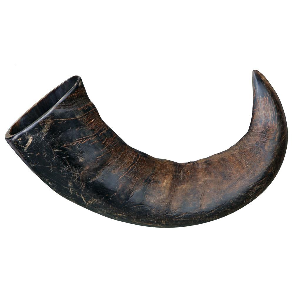 Büffel-Kauhorn für Hunde, Bild 3