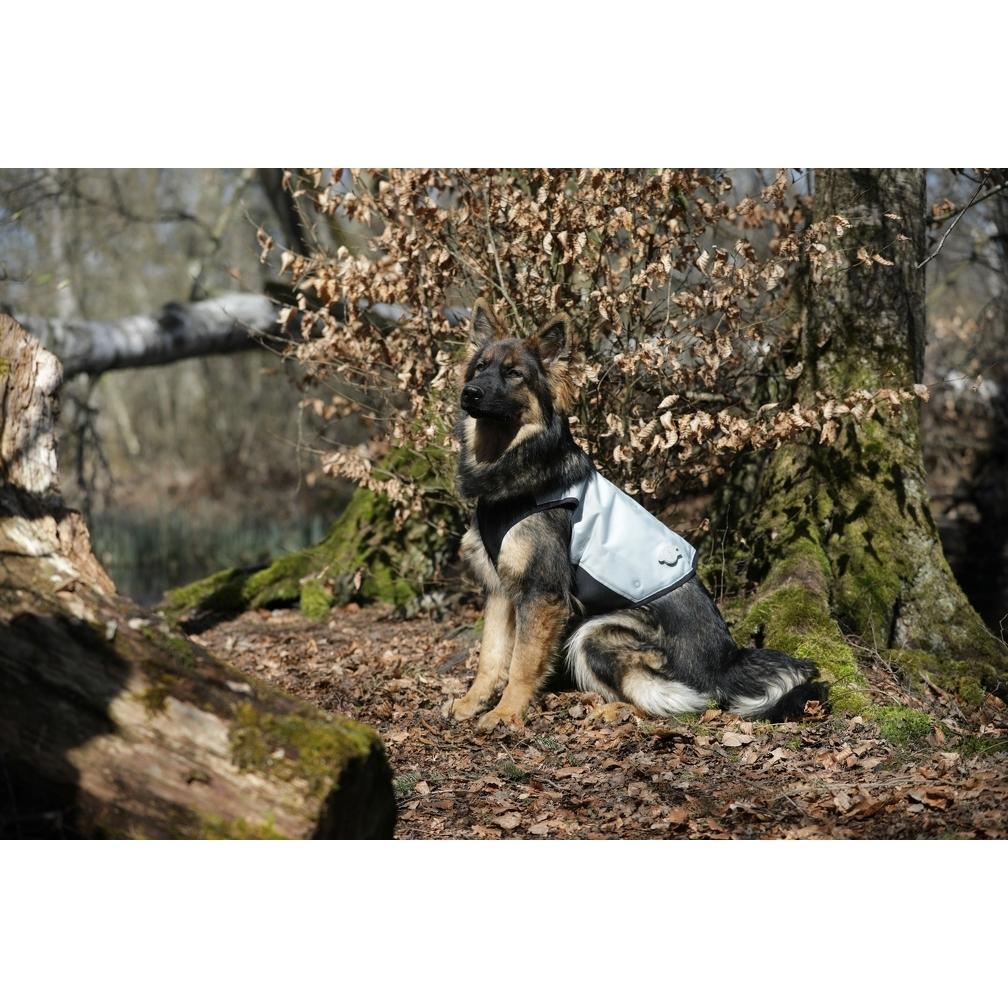 Cani.Cool Kühlweste für Hunde, Bild 5