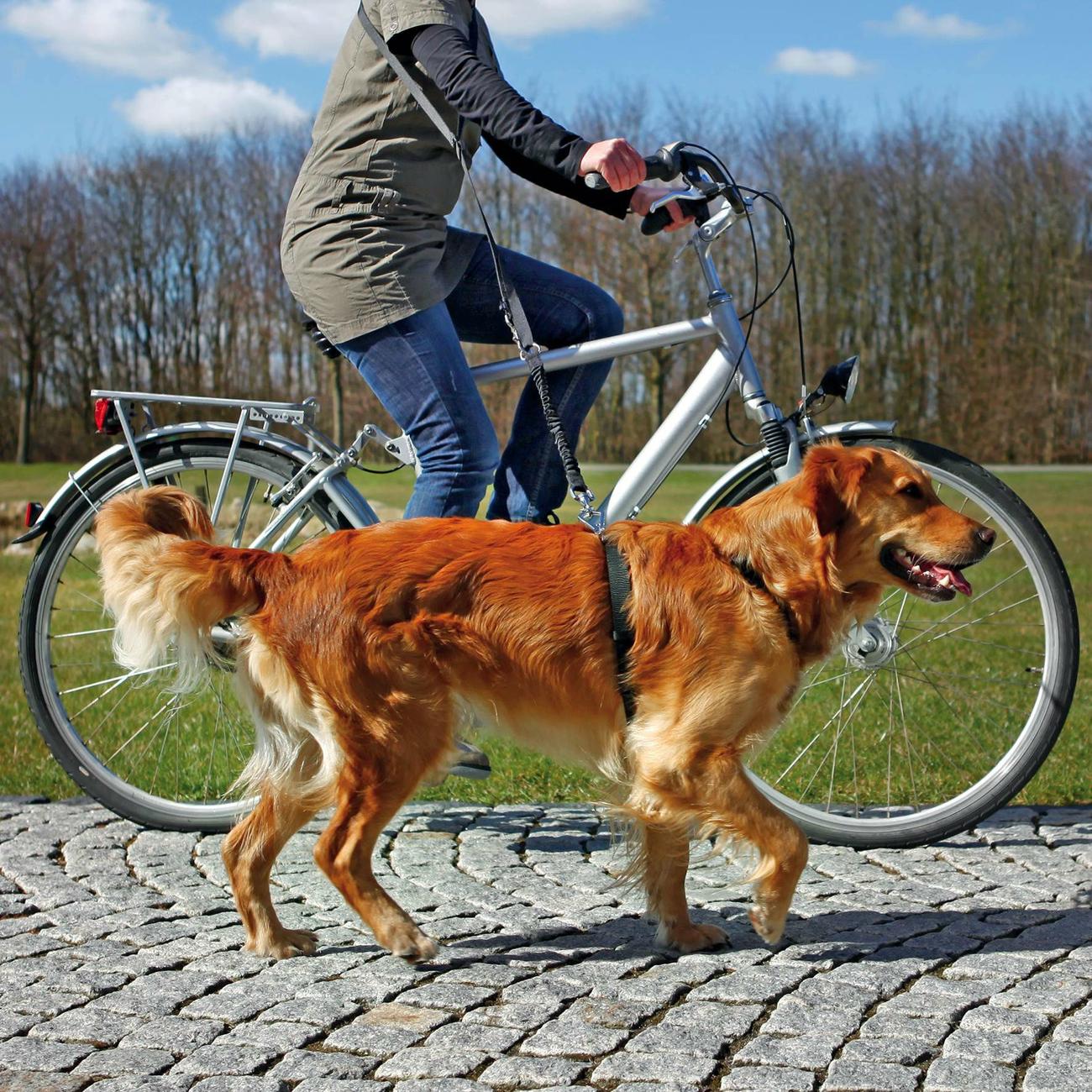 fahrradleine und joggingleine f r hunde 1282 von trixie g nstig bestellen. Black Bedroom Furniture Sets. Home Design Ideas