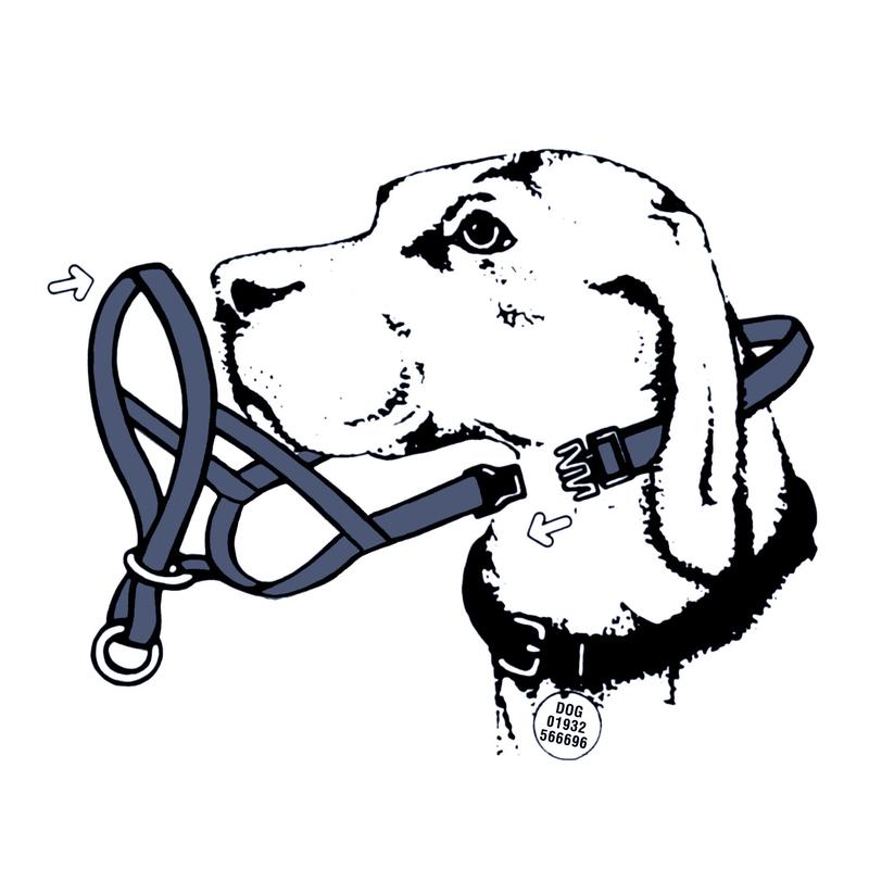 Company of Animals HALTI Hundehalfter Kopfgeschirr für Hunde, Bild 4