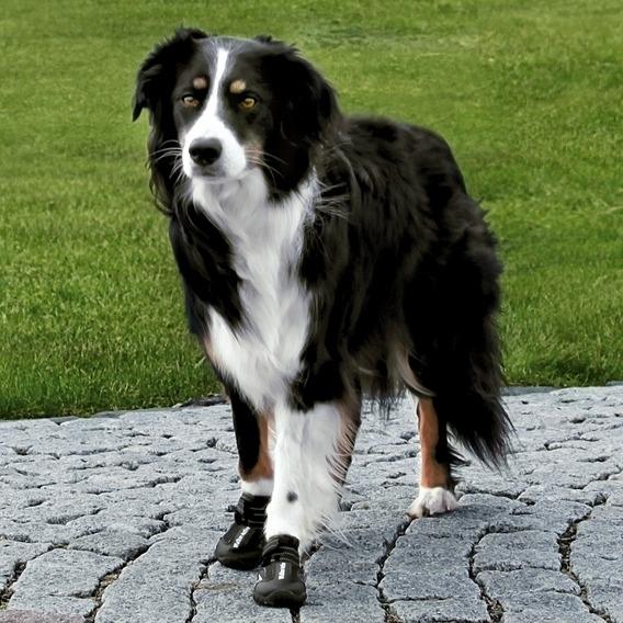 Hundeschuhe Pfotenschutz Walker Active, Bild 3