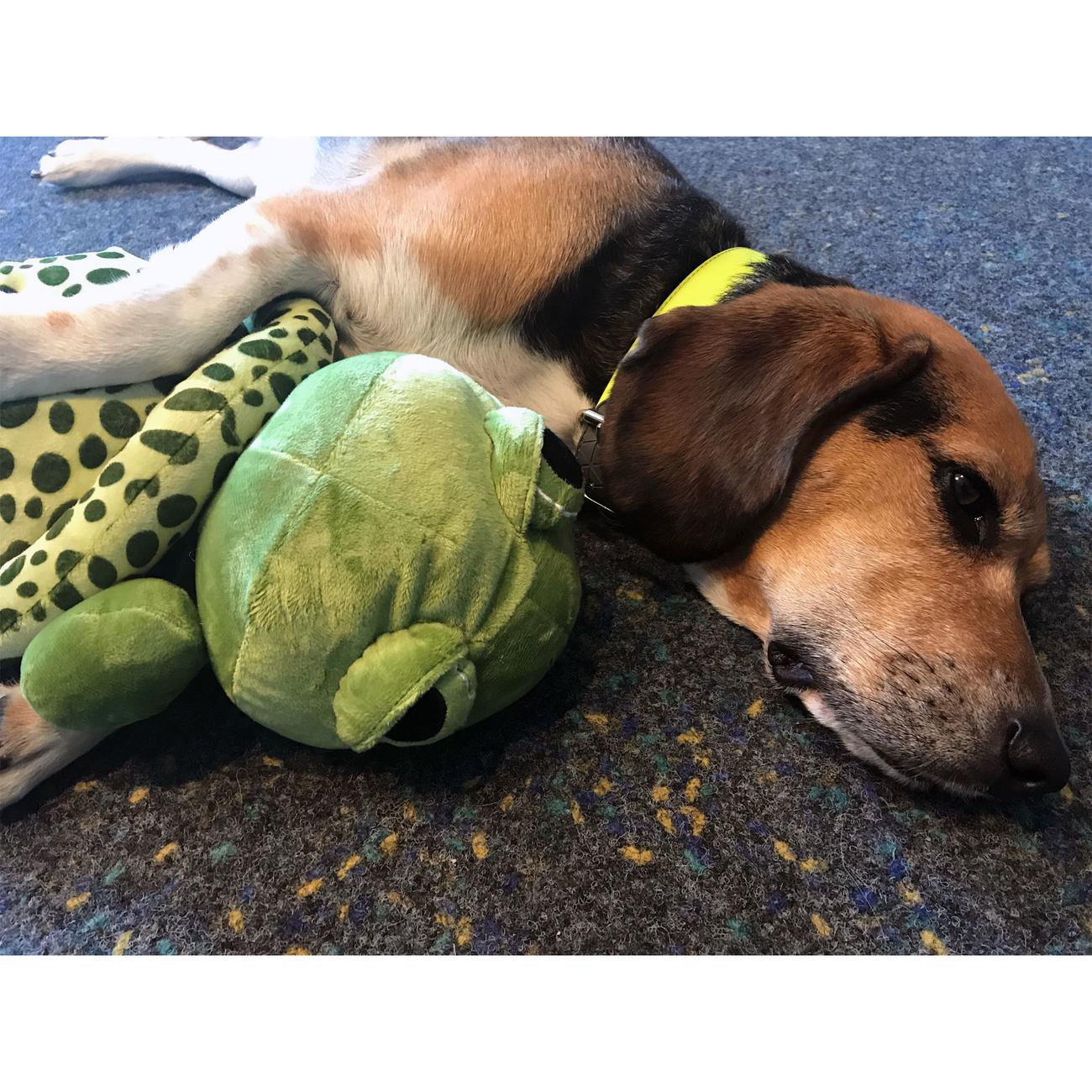 Trixie Hundespielzeug Plüsch Schildkröte, Original-Tierstimme XL 35854, Bild 3