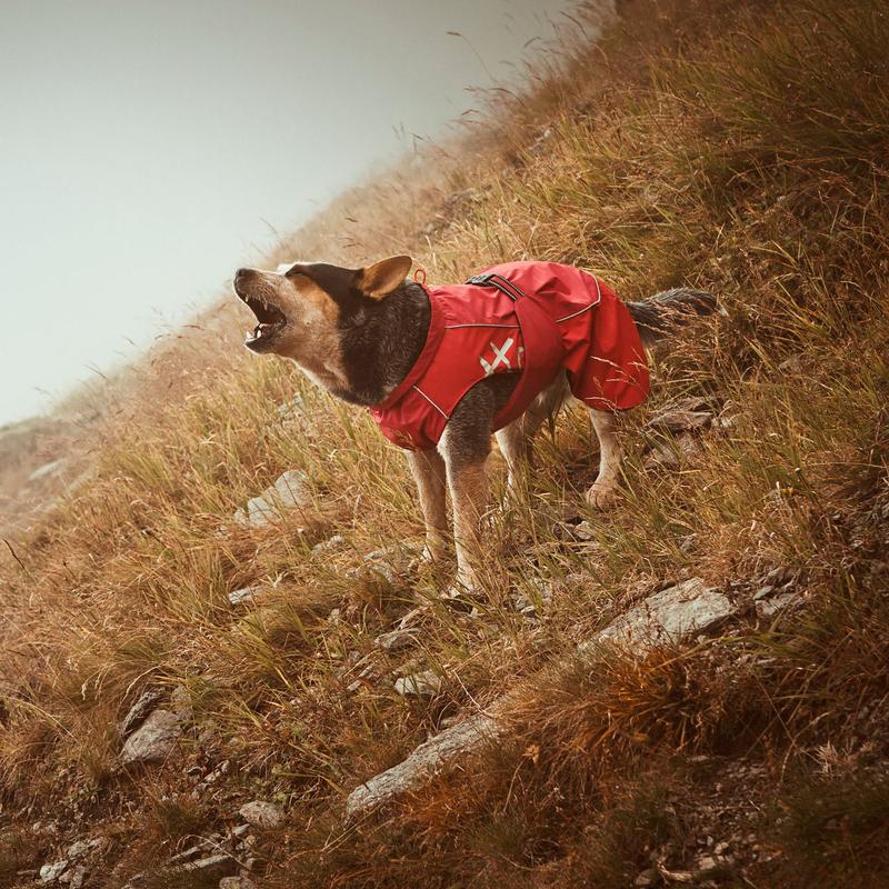 HURTTA Torrent Regenmantel für Hunde, Bild 9