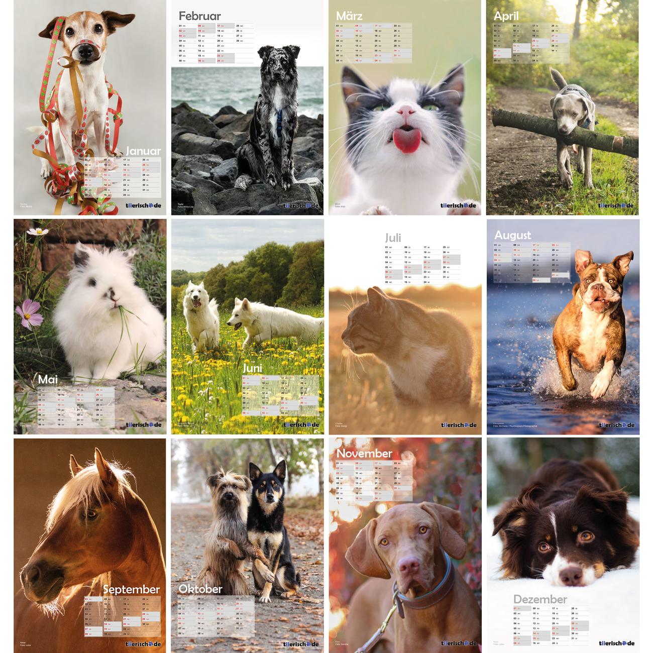 tiierisch.de Kalenderstars 2019 - der tiierische Jahreskalender, Bild 2