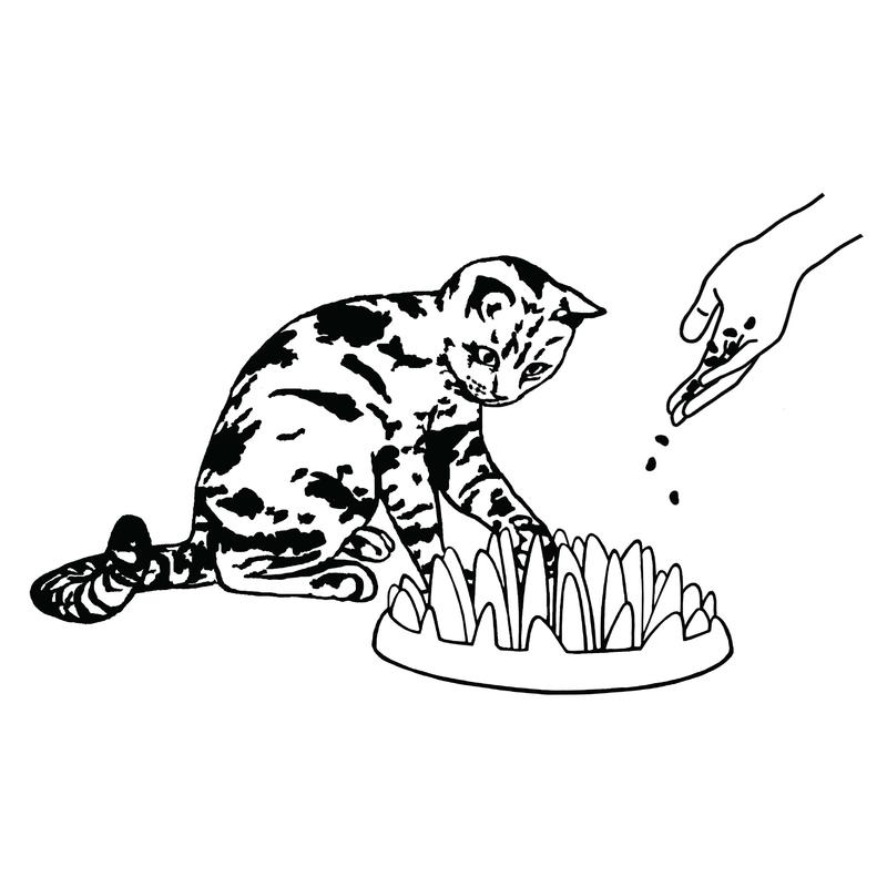 Northmate Catch für Katzen, Bild 4