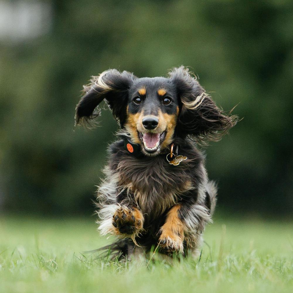 PitPat Aktivitätsmonitor für Hunde mit App, Bild 5