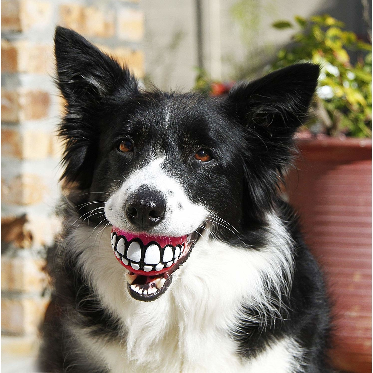 Rogz ROGZ Grinz Ball für Hunde, Bild 6