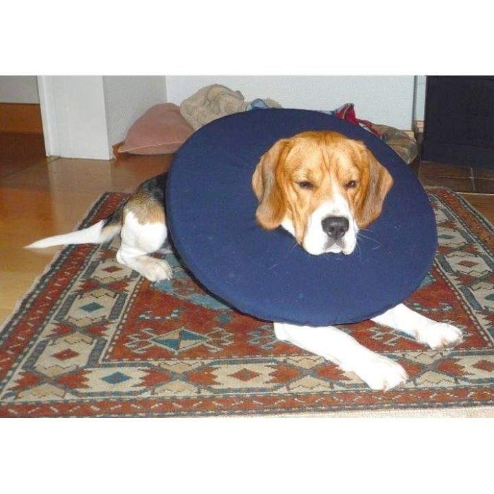tepaw schutzkragen leckschutz f r hunde von tepaw g nstig bestellen. Black Bedroom Furniture Sets. Home Design Ideas