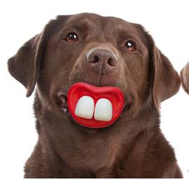 Vollgummi Hundespielzeug, Bild 2