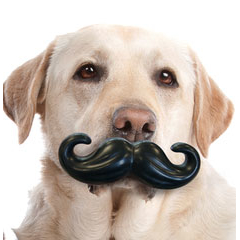 Vollgummi Hundespielzeug, Bild 3