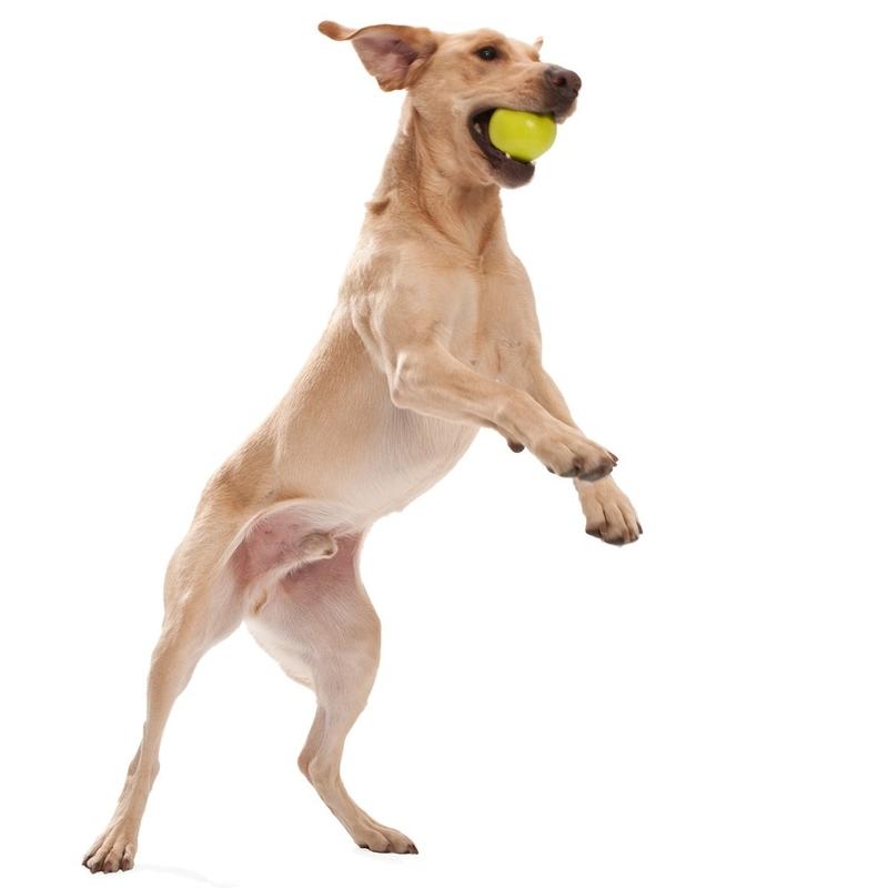 West Paw Jive Hundespielzeug, Bild 3