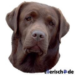 Hundeaufkleber Labrador braun