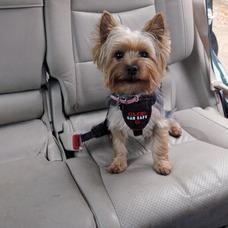 Autogeschirr für Hunde CLIX Car Safe