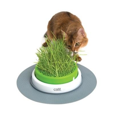 catit Senses 2.0 Grastopf Grass Planter