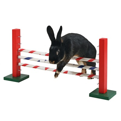 Kaninchen Agility Steilsprung