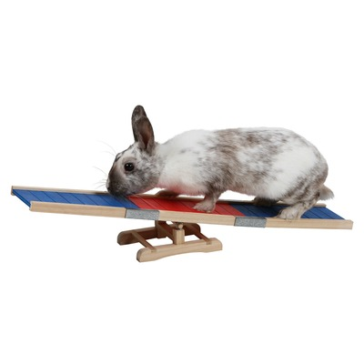 Kaninchen Agility Wippe