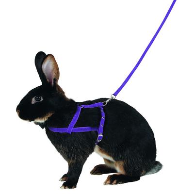 Kaninchen Geschirr Agility mit Leine