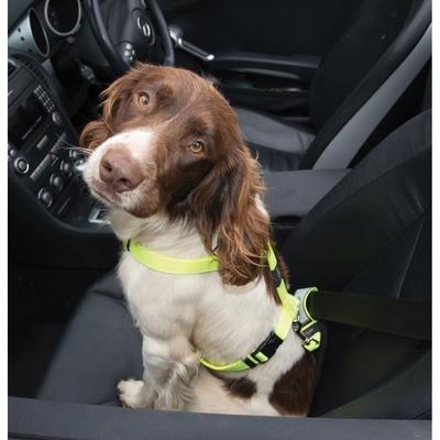 Rogz Safety Belt - Car Clip