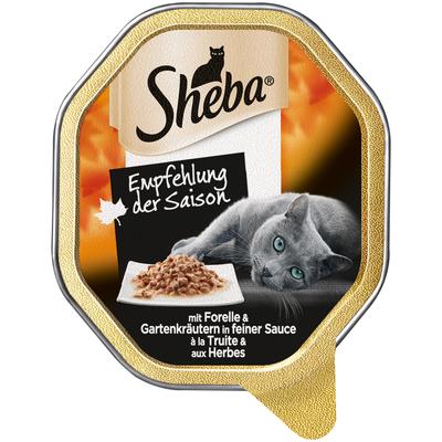 Sheba - Empfehlung der Saison