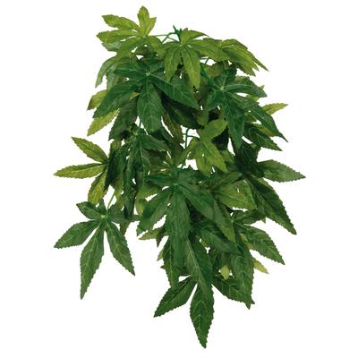 Terrarium Seiden-Hängepflanzen, Abutilon
