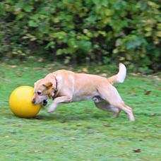 Kerbl Hundespielball Treibball