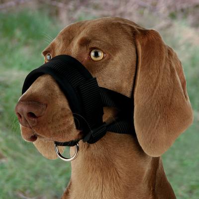 Trixie Maulschlaufe für Hunde aus Nylon