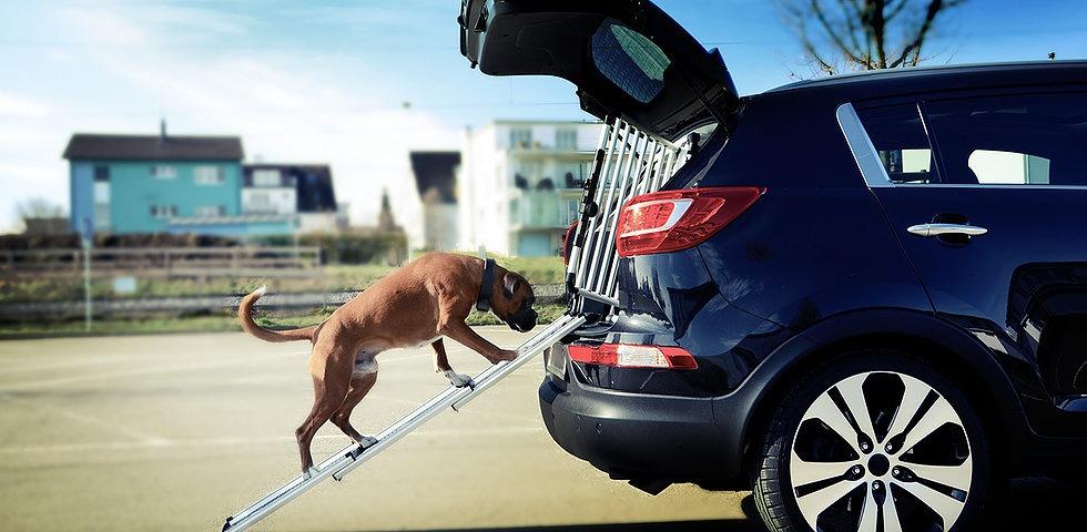 4pets Hundeboxen Schweiz, Bild 4