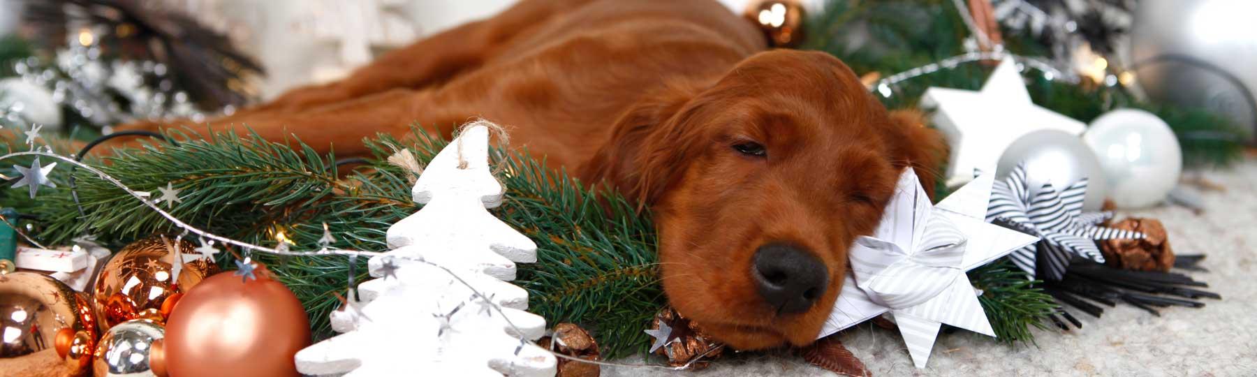 weihnachten weihnachtsmarkt und weihnachtsgeschenke f r hunde. Black Bedroom Furniture Sets. Home Design Ideas