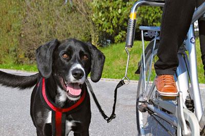 Hunde Fahrradleinen und Abstandshalter