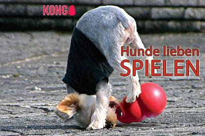 KONG Hundespielzeug Shop