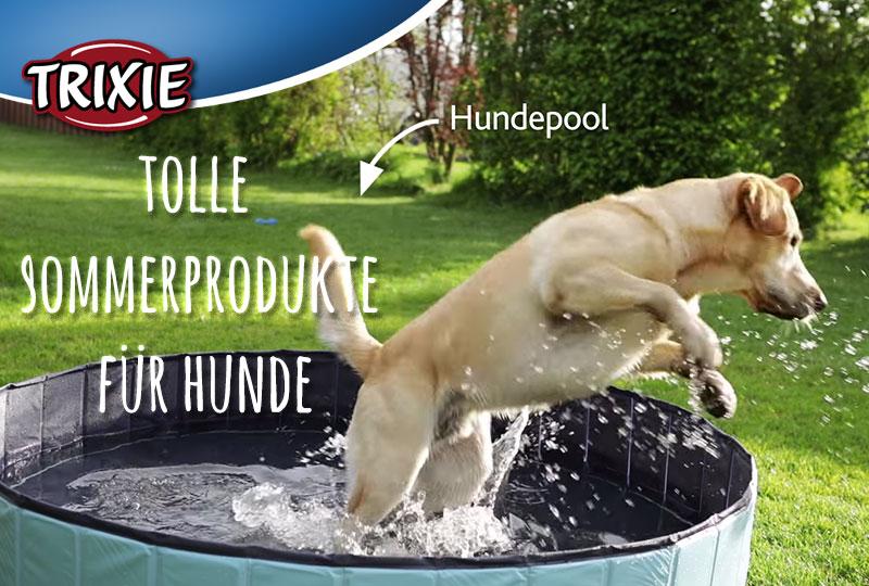 Hunde Sommerprodukte