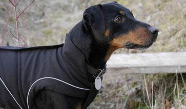 Regenmantel Für Hunde Mit Bauchschutz : hundemantel und hundebekleidung g nstig kaufen ~ Frokenaadalensverden.com Haus und Dekorationen
