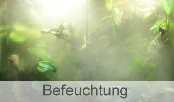 Terrarium Befeuchtung