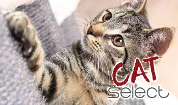 Cat Select modulare Kratzbäume