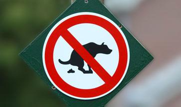 Kotbeutel und Kotbeutelspender für den Hund