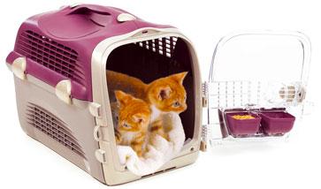 Katzen Transport