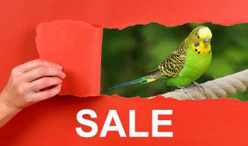 Vogelzubehör SALE Angebote