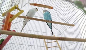 Vogelkäfige günstig