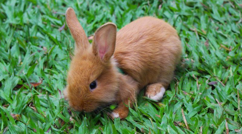 Abenteuerland Garten Freiluftsaison Für Kaninchen Tiierischde