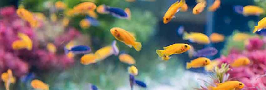 mehr sauerstoff im aquarium luftpumpe mit ausstr mer magazin. Black Bedroom Furniture Sets. Home Design Ideas