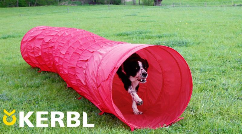 Agility Pylonen-Hürden Set für Hunde
